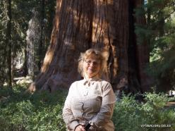 """Sekvojos nacionalinis parkas. Didysis mamutmedis (Sequoiadendron giganteum). """"General Sherman"""" – didžiausias medis pasaulyje"""