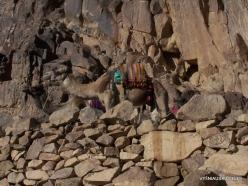 2 Mount Sinai (Gebel Musa or Mount Moses) (10)