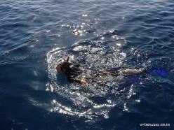 Red Sea. Snorkeling (5)