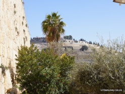 Jerusalem. Old town (2)