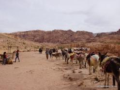 Petra. Ancient City (11)