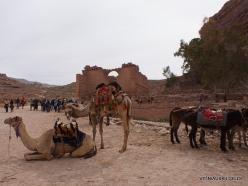 Petra. Ancient City (13)