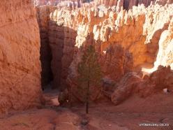 Braiso kanjono nacionalinis parkas (25)