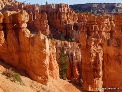 Braiso kanjono nacionalinis parkas (40)