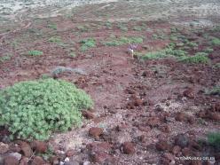Near El Medano. Nature reserve Montaña Roja