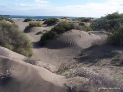 Near El Medano. Playa del Médano (5)