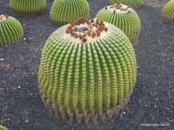 Near Los Christianos. Cactus park (23)