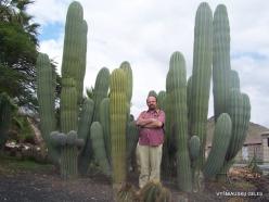 Near Los Christianos. Cactus park (26)