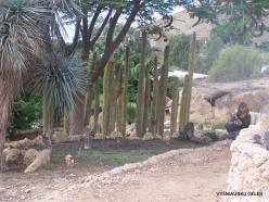Near Los Christianos. Cactus park (4)