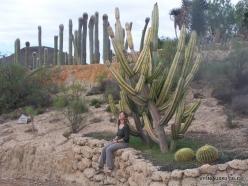 Near Los Christianos. Cactus park (7)