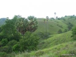 1 Komodo National Park. Rinca island (5)