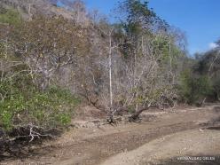 Komodo National Park. Komodo island (12)
