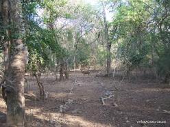 Komodo National Park. Komodo island (8)