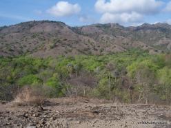 Komodo National Park. Komodo island (9)