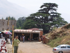 1. Arz ar-Rabb (Cedars of God) reserve (1)