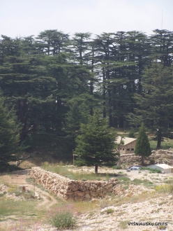 2. Arz ar-Rabb (Cedars of God) reserve (15)