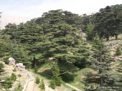 2. Arz ar-Rabb (Cedars of God) reserve (21)