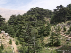 2. Arz ar-Rabb (Cedars of God) reserve (25)