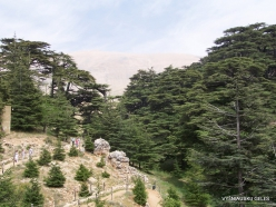 2. Arz ar-Rabb (Cedars of God) reserve (29)