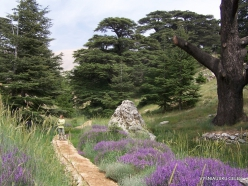 2. Arz ar-Rabb (Cedars of God) reserve (32)
