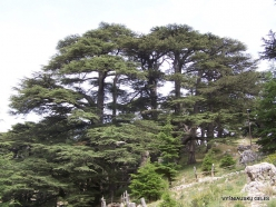 2. Arz ar-Rabb (Cedars of God) reserve (35)