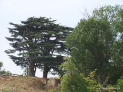 2. Arz ar-Rabb (Cedars of God) reserve (36)