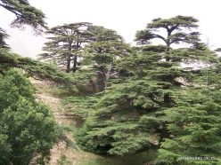 2. Arz ar-Rabb (Cedars of God) reserve (39)