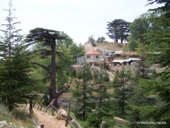 2. Arz ar-Rabb (Cedars of God) reserve (40)