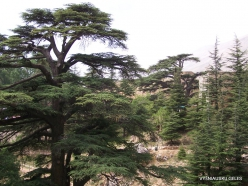 2. Arz ar-Rabb (Cedars of God) reserve (43)