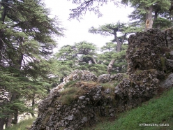 2. Arz ar-Rabb (Cedars of God) reserve (46)