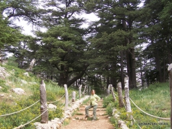 2. Arz ar-Rabb (Cedars of God) reserve (47)