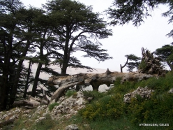 2. Arz ar-Rabb (Cedars of God) reserve (48)
