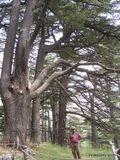 2. Arz ar-Rabb (Cedars of God) reserve (50)