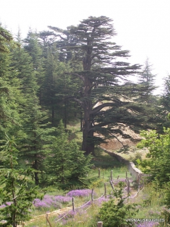2. Arz ar-Rabb (Cedars of God) reserve (55)