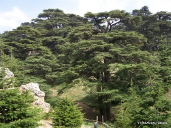 2. Arz ar-Rabb (Cedars of God) reserve (56)