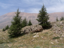 Arz ar-Rabb (Cedars of God) reserve (14)