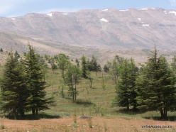 Arz ar-Rabb (Cedars of God) reserve (4)