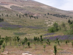 Arz ar-Rabb (Cedars of God) reserve (5)