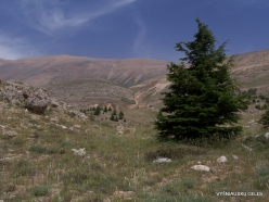 Arz ar-Rabb (Cedars of God) reserve (8)