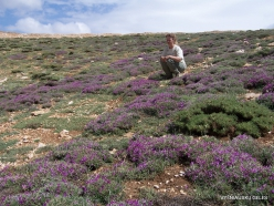 Lebanon Mountains. Machraa el Qalaât. Alpine plants (2)