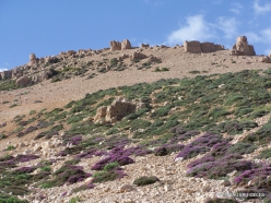 Lebanon Mountains. Machraa el Qalaât. Alpine plants (7)