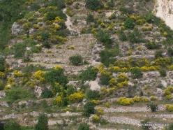 Wadi Kadisha (Kadisha Valley) (8)