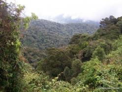 2 Pahang. Near Brinchang. Mossy Forest (3)