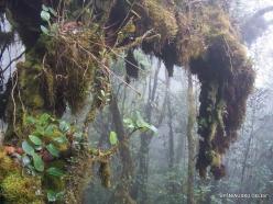 2 Pahang. Near Brinchang. Mossy Forest (7)