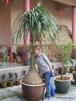 Pahang. Brinchang. Sam Poh Temple (13)