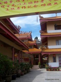 Pahang. Brinchang. Sam Poh Temple (8)