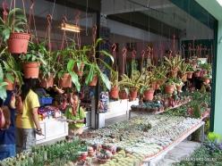 Pahang. Near Tanah Rata. Green Farm (6)