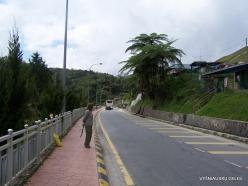 Pahang. Tanah Rata (3)