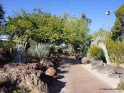 1 Las Vegasas. Ethel M kaktusų parkas (1)