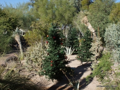 1 Las Vegasas. Ethel M kaktusų parkas (10)